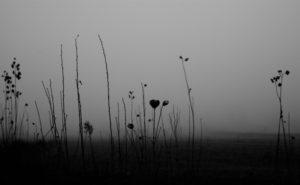 still-life_03