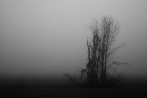 still-life_09
